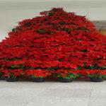 Árbol navideño elaborado con flores propias de la época